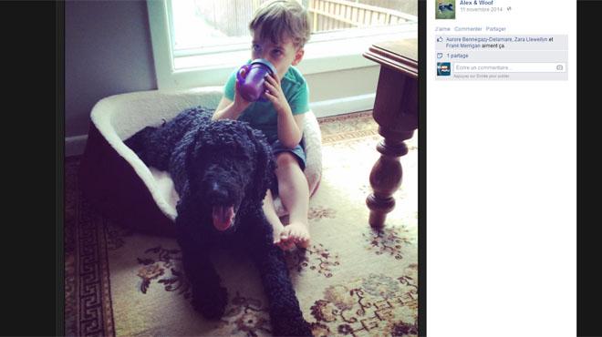Ce chien a changé la vie d'Alex, un petit garçon autiste