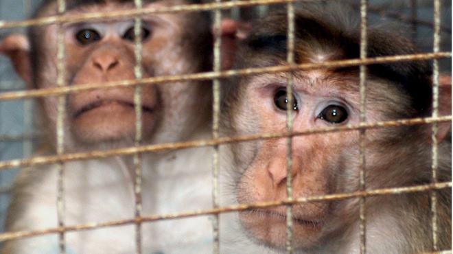 Faut-il interdire les expérimentations animales ? 8 militants français en grève de la faim