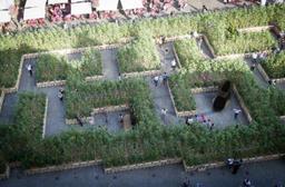 Quelque 35.000 personnes ont visité le labyrinthe de tournesols