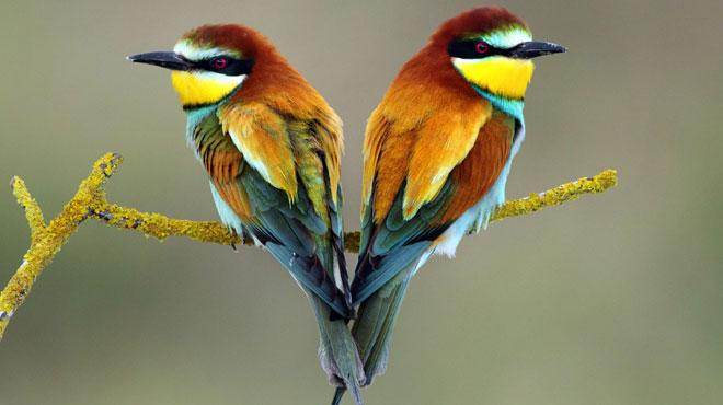Le nid d'un très rare oiseau aux couleurs magnifiques découvert en Belgique