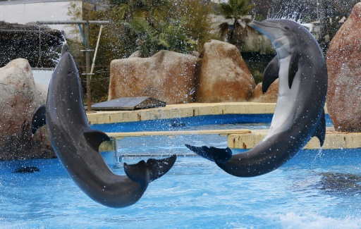 Marineland, plus grand parc marin d'Europe, confronté aux