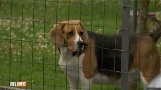 Les habitants de Brunehaut sous le choc, 10 chats et chiens sont morts empoisonnés- C'est honteux!
