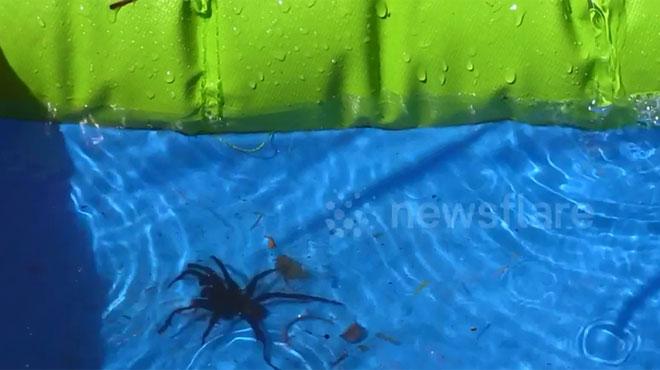 Ces trois enfants hurlent de peur en d couvrant une for Grosse piscine gonflable
