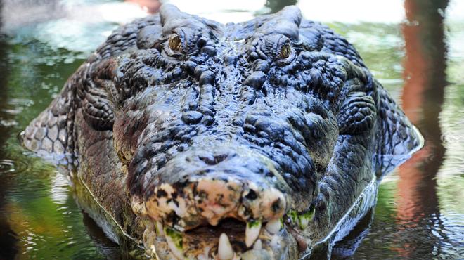 Amsterdam: les trafiquants de drogue protégeaient leur butin avec... deux crocodiles