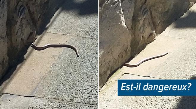 Barbera a cru observer un serpent à Franière: connaissez-vous cet animal? (photo)