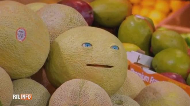 Avez vous mang mes amis quand un melon s adresse aux - Quand cueillir un melon ...