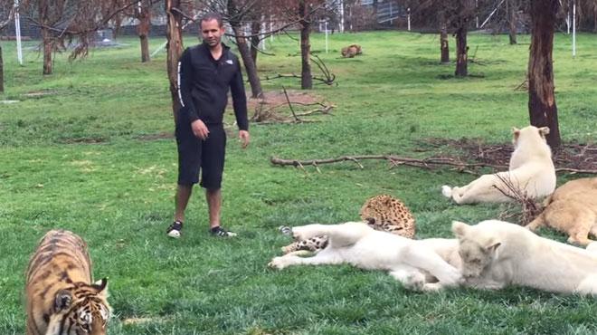 Ce tigre empêche un jaguar d'attaquer un homme (vidéo)