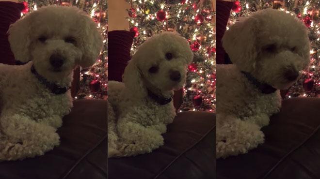 Elle interprète un chant de Noël pour son chien: voici sa réaction (vidéo)
