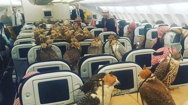 PHOTO: un prince saoudien réserve 80 places dans l'avion pour... ses faucons