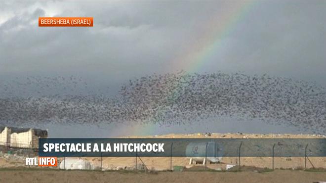 Spectacle saisissant: que font ces milliers d'étourneaux dans le ciel?