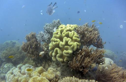Océans: Les zones mortes menacent de nombreux récifs coralliens