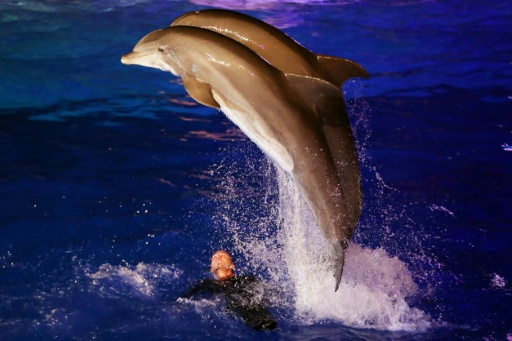 Recours du Marineland contre l'interdiction de la reproduction des dauphins en captivité