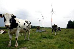 La Belgique compte près de 2.000 exploitations bio, dont trois quarts en Wallonie