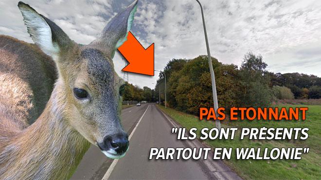 Des chevreuils en liberté aperçus à Rocourt en montant sur l'autoroute: les conseils pour éviter un accident