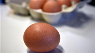 Fipronil dans les oeufs- 20 TONNES de produits contaminés au Danemark , l'enquête s'accélère