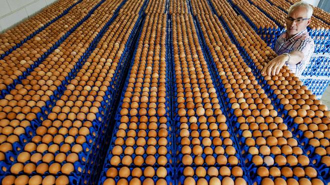 200.000 œufs contaminés venant de Belgique ont été vendus en France et ont déjà été consommés