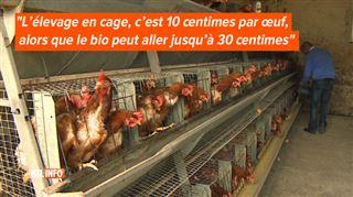 Poules élevées en cage, au sol, plein air… Voici ce qui se cache derrière ces termes