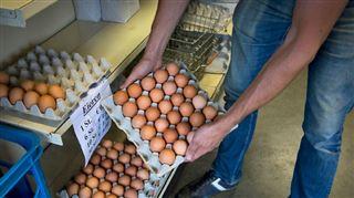 Voici comment le gouvernement compte aider les éleveurs belges touchés par la crise des oeufs contaminés