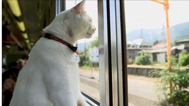 Ce train japonais accueille un wagon-café pour chats