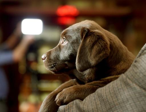 Journées portes ouvertes de la SPA: 1.340 animaux adoptés, en hausse de 10%