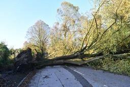 Ouragan Ophelia: des foyers toujours sans électricité en Irlande