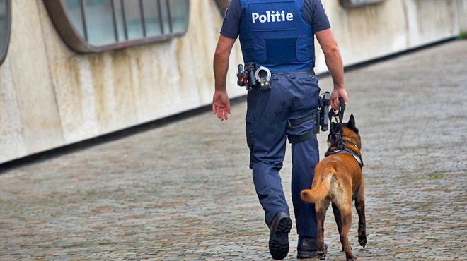 Braquage à la voiture bélier à Wavre: la police fait appel à un chien pisteur et met la main sur un suspect