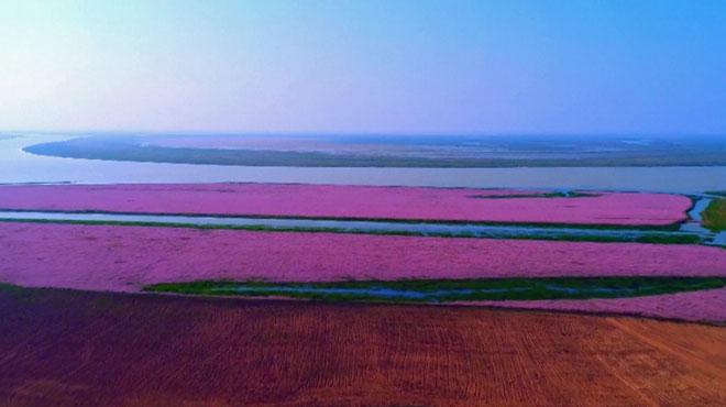 Chine Une Magnifique Mer De Fleurs Transforme Le Paysage En
