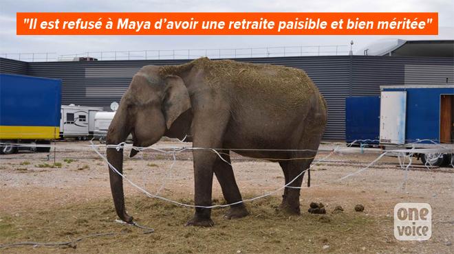 La justice française estime que Maya l'éléphante, 54 ans, peut rester dans son cirque: