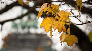 Prévisions météo: va-t-on être épargné par la pluie ce dimanche?