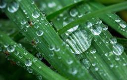 Pluie et bruine au programme pour le début de la semaine prochaine