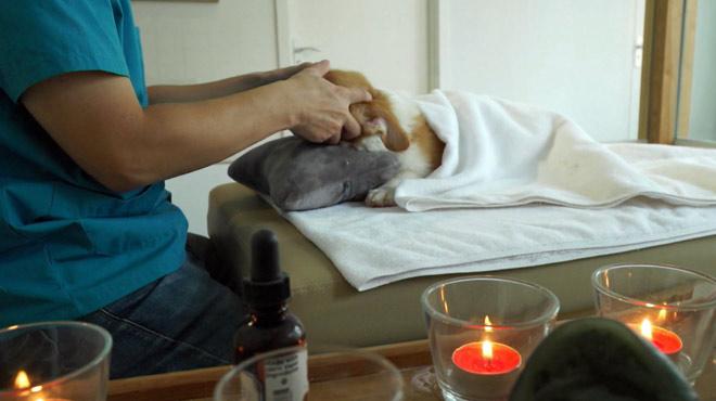 Massage, hôtel… En Chine, les chiens sont traités comme des rois: