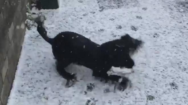 Bonheur à l'état pur:  ce chien découvre la neige et… on aimerait presque être à sa place (vidéo)
