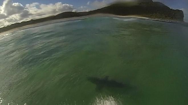 """Mitch fait une rencontre effrayante en mer: """"J'ai surfé sur un requin !"""