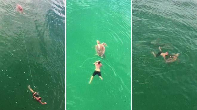 Il plonge en plein océan Atlantique pour sauver une tortue en détresse: un homme filme la scène spectaculaire