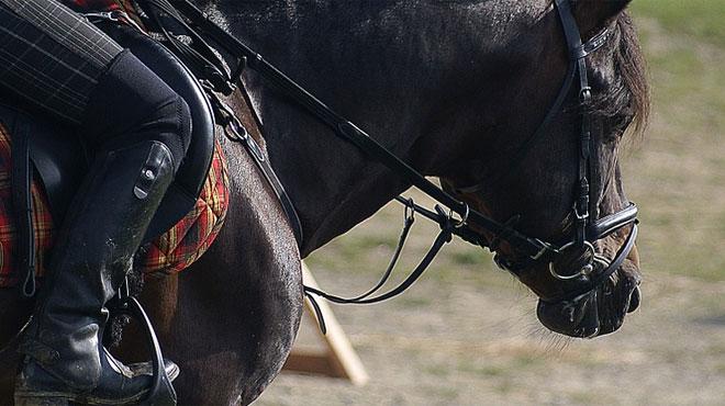 Un cheval désarçonne sa cavalière et surprend un automobiliste dans le Tournaisis: la voiture termine sa course dans le fossé, au-dessus de l'animal