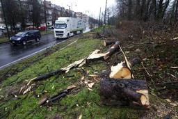 Fermeture des parcs, bois et forêts bruxellois en raison des vents violents attendus