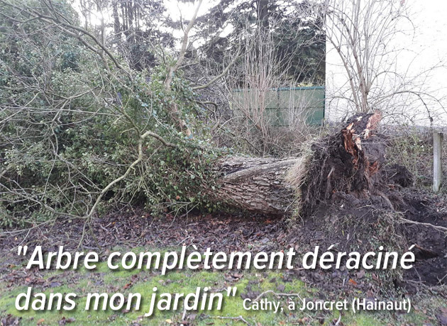 arbre-deracine-joncret