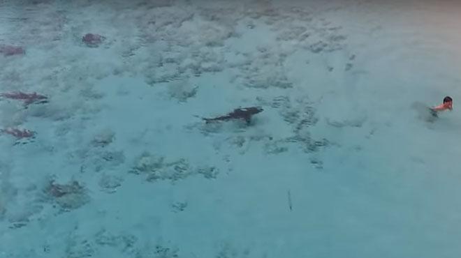 Un enfant se jette dans une eau infestée de requins — Bahamas