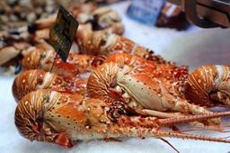 Suisse : les homards ne pourront plus être plongés dans l'eau bouillante