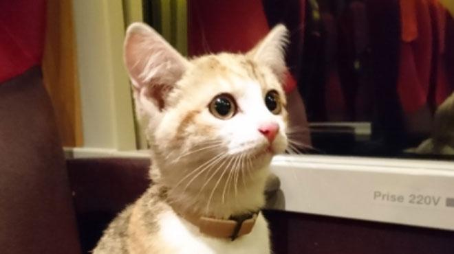 Ce chaton a pris le train tout seul... puis a retrouvé sa famille (photos)