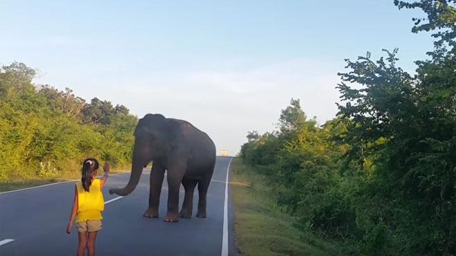 Incroyable: sans aucune crainte, une toute petite fille fait face à un éléphant pour le faire déguerpir de la route  (vidéo)
