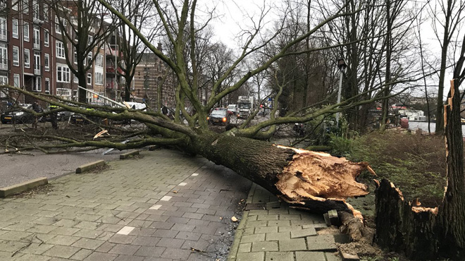 La tempête Friederike fait neuf morts en Europe