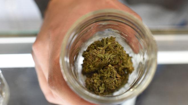 Frameries: la police découvre une culture de plants de cannabis mais aucune trace des auteurs
