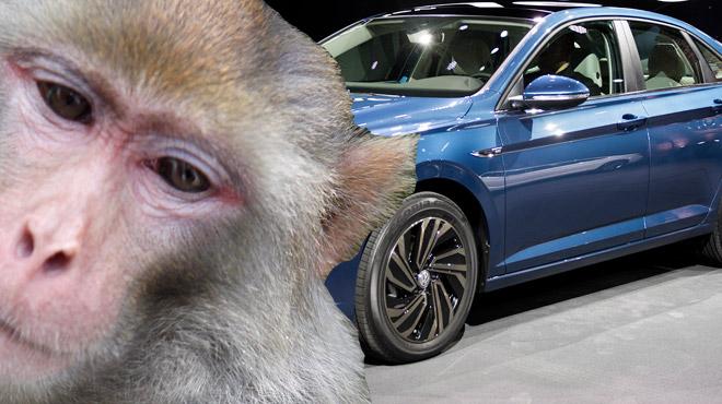 Diesel: les fabricants automobiles allemands accusés de tests sur des singes et humains