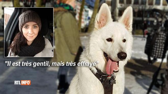 Cauchemar pour une famille de Norvégiens arrivés en Belgique: leur chien Maverick a disparu