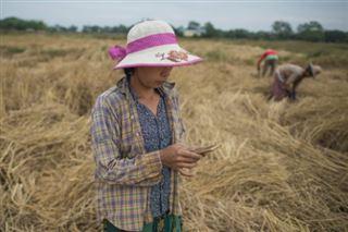 La technologie au secours des agriculteurs birmans