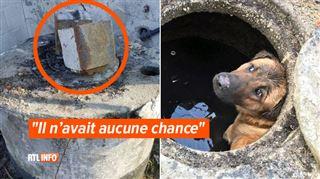Un chien enfermé vivant dans un puits à Dinant- des blocs de béton avaient été placés volontairement sur l'ouverture 2