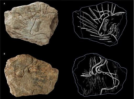 Bretagne: des gravures vieilles de 14.000 ans éclairent la Préhistoire
