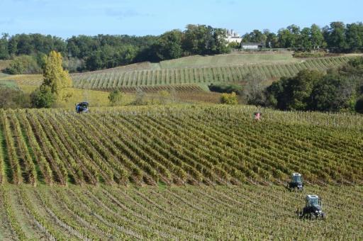 Pesticides, phéromones, larves tueuses: les armes du cultivateur contre les nuisibles