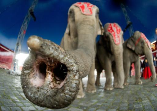 Le cirque de l'éléphante Maya débouté face à une association
